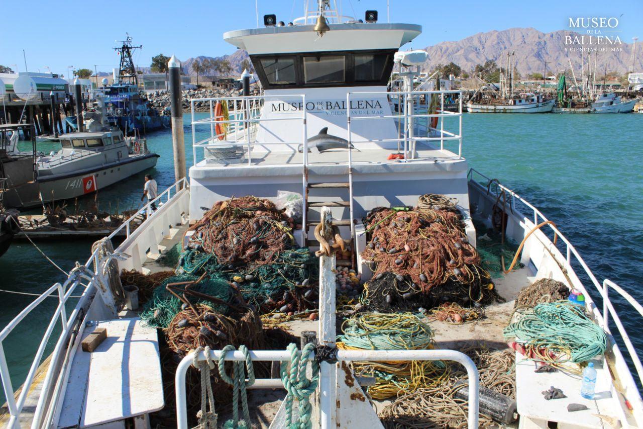 Geborgene Stellnetze, die dem Vaquita allzu oft zum Verhängnis werden.