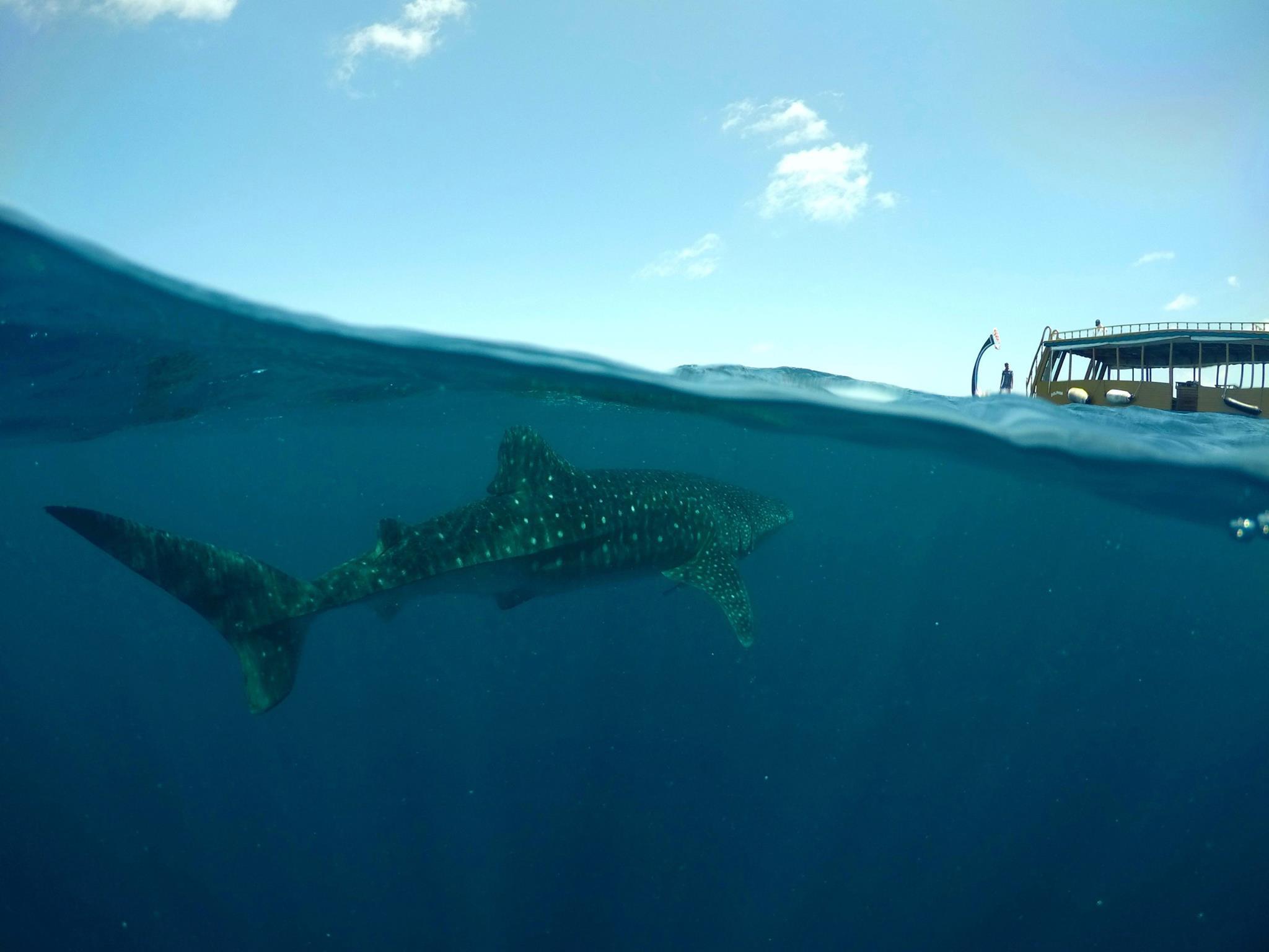 Wahhai-Schutz-Meer-Malediven