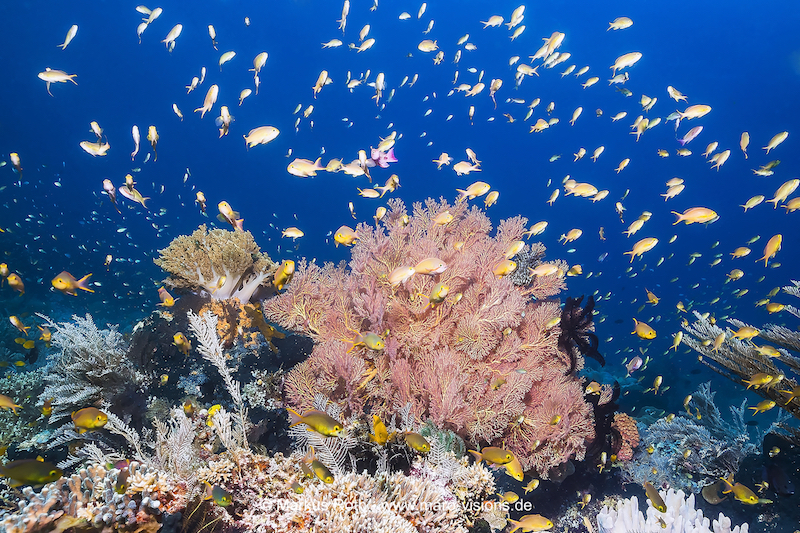 In indonesia you can experience dives like a fish soup